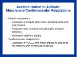 acclimatization to altitude muscle and cardiovascular adaptations