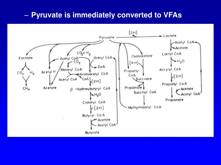 Pyruvate is immediately converted to VFAs