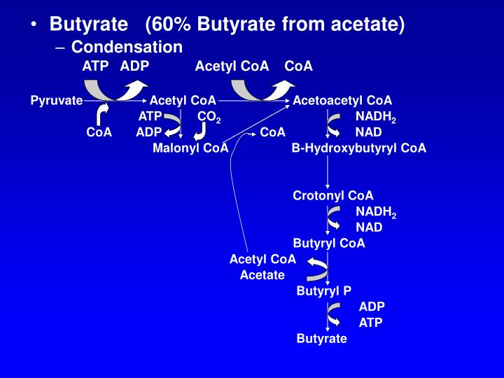 Butyrate   (60% Butyrate from acetate)
