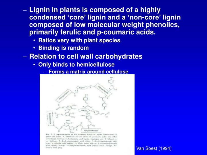 Lignin in plants is composed of a highly condensed 'core' lignin and a 'non-core' lignin composed of low molecular weight phenolics, primarily ferulic and p-coumaric acids.
