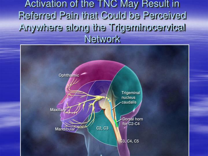 Activation of the TNC May Result in Referred Pain that Could be Perceived Anywhere along the Trigeminocervical Network