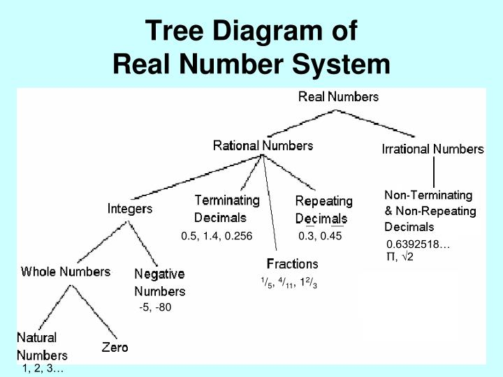 Tree Diagram Of Number System Search For Wiring Diagrams