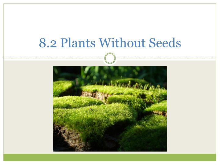 8 2 plants without seeds n.