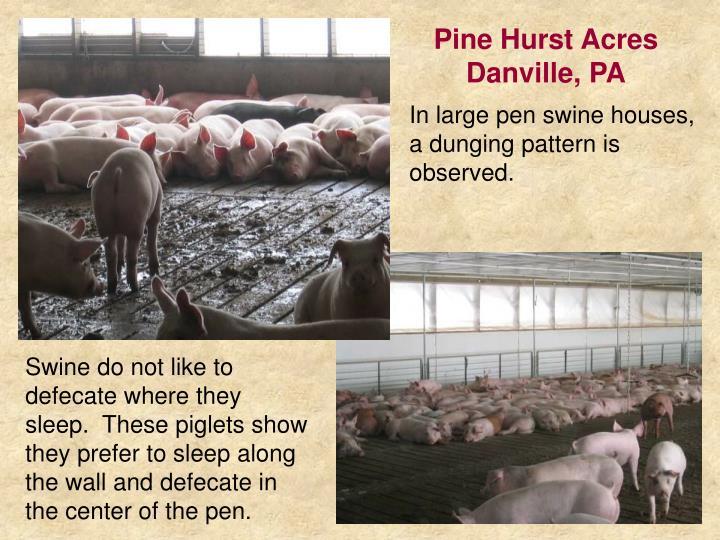 Pine Hurst Acres