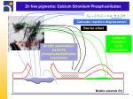 zn free pigments calcium strontium phosphosilicates