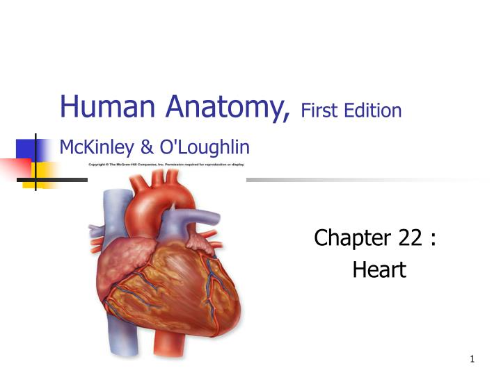 Ppt Human Anatomy First Edition Mckinley Amp Oloughlin