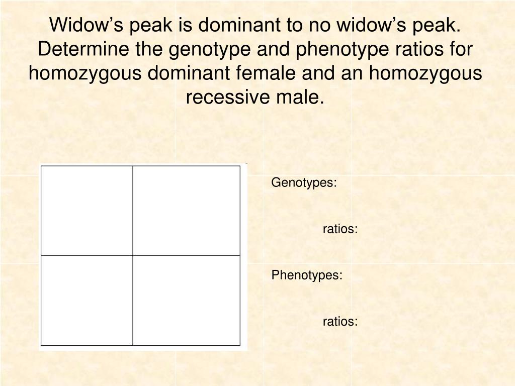 PPT - Genotypes: ratios: Phenotypes: ratios: PowerPoint ...