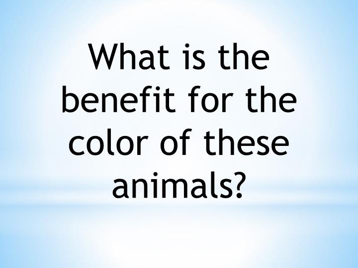 What is the benefit for the color of these animals?