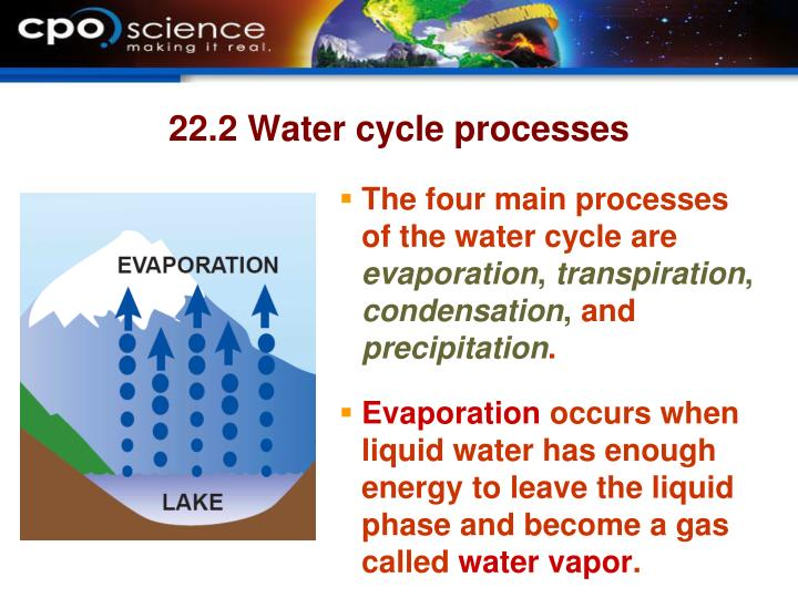 The four main processes of the water cycle are