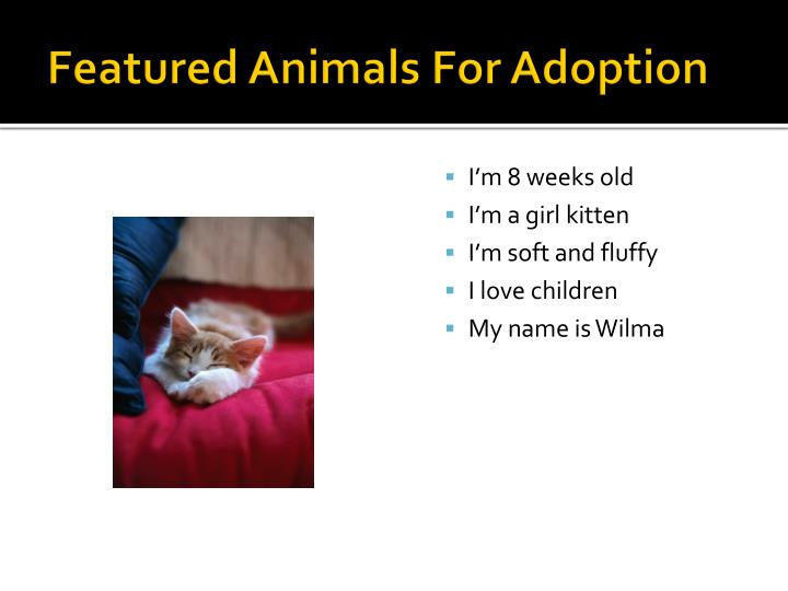 Featured Animals For Adoption