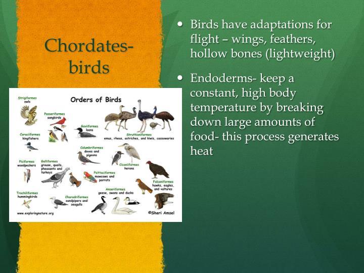 Chordates-
