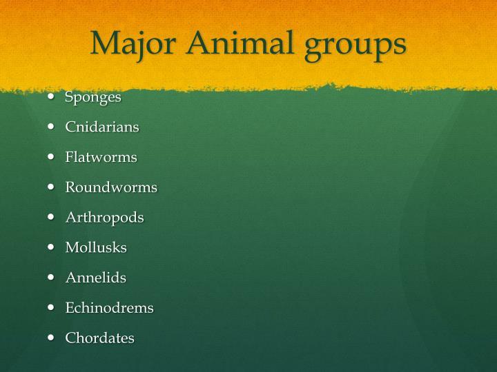 Major Animal groups