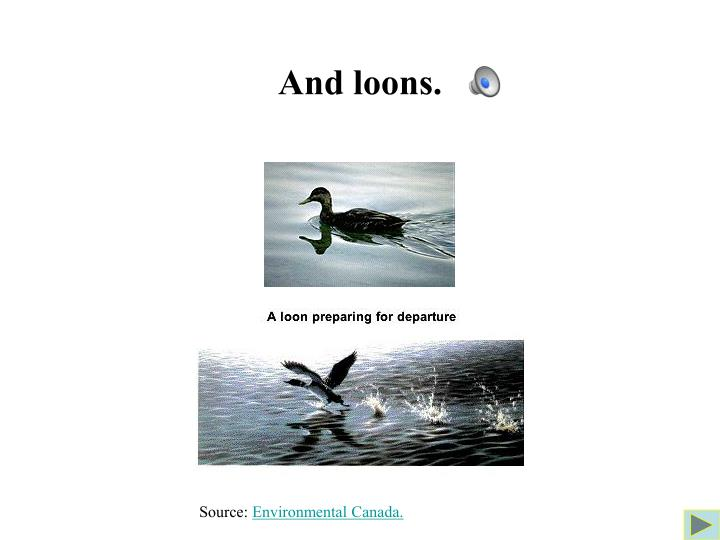 And loons.