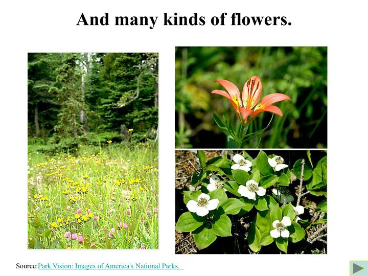 And many kinds of flowers.