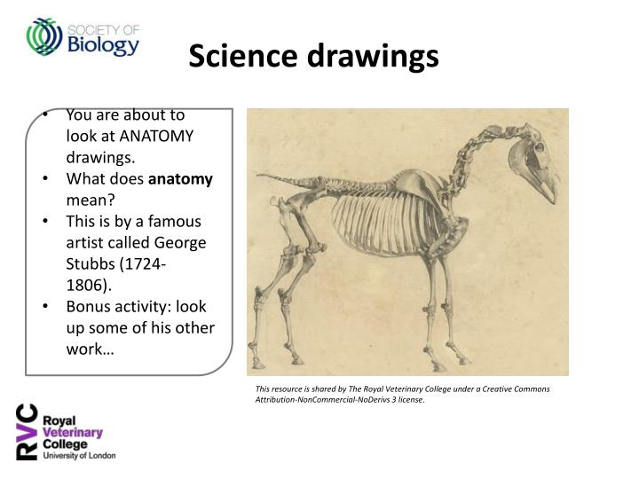 You are about to look at ANATOMY drawings.