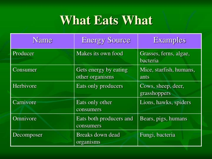 What Eats What