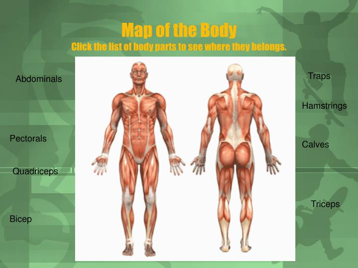 Map of the Body