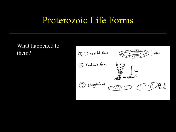 Proterozoic Life Forms