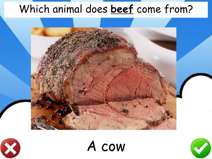 Which animal does