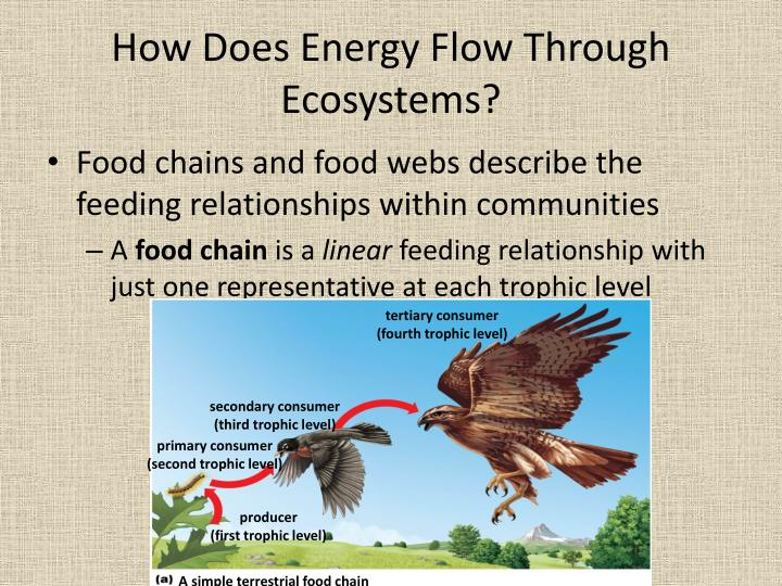 Describe How Energy Flows Through Ecosystems Energy Etfs