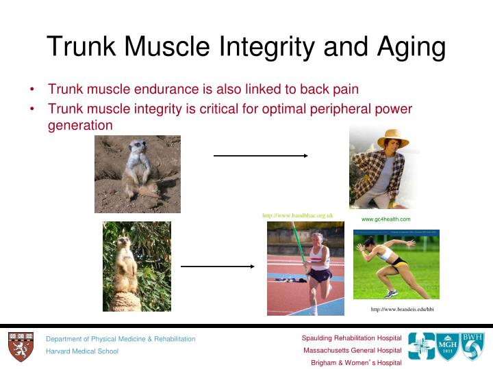 Trunk Muscle Integrity and Aging