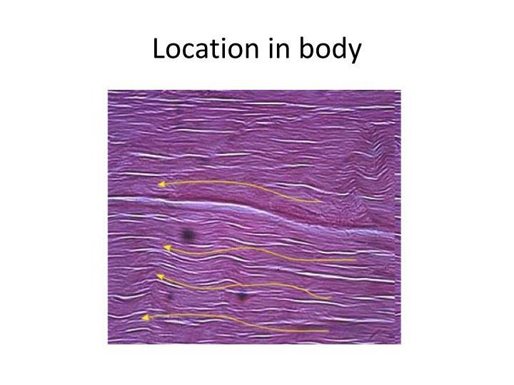 Location in body
