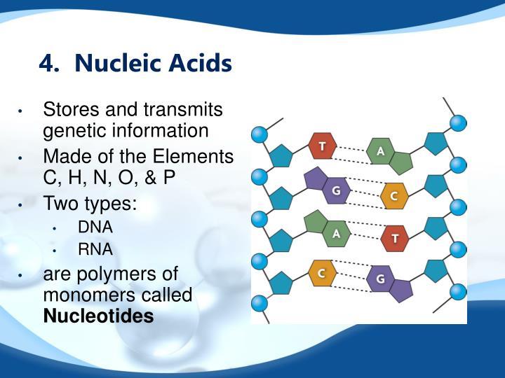 4.  Nucleic Acids