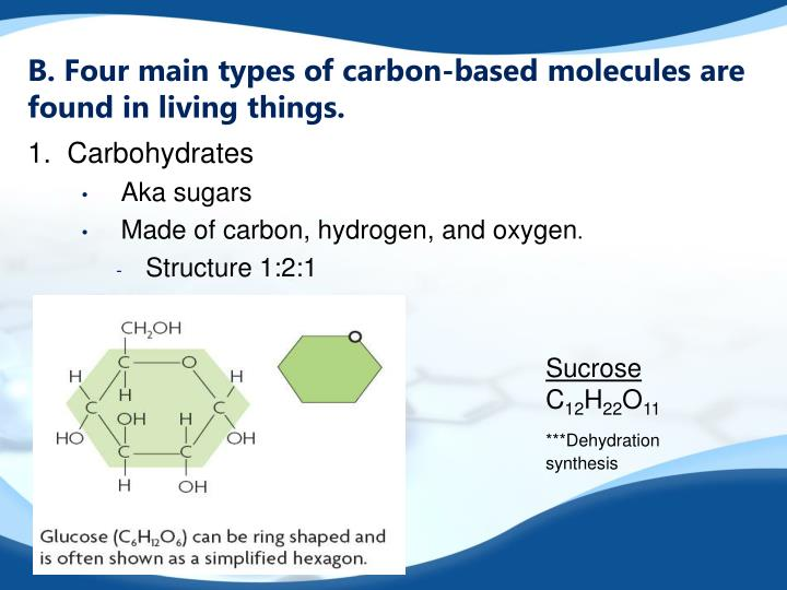 B. Four main types of carbon-based molecules are found in living things.
