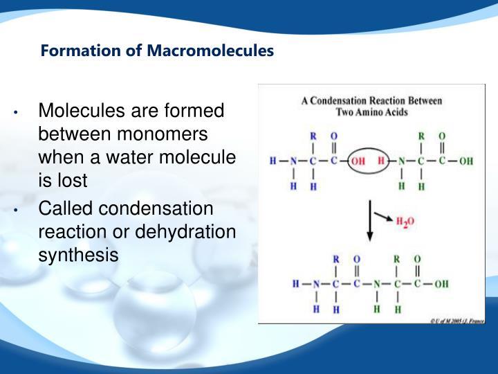 Formation of Macromolecules