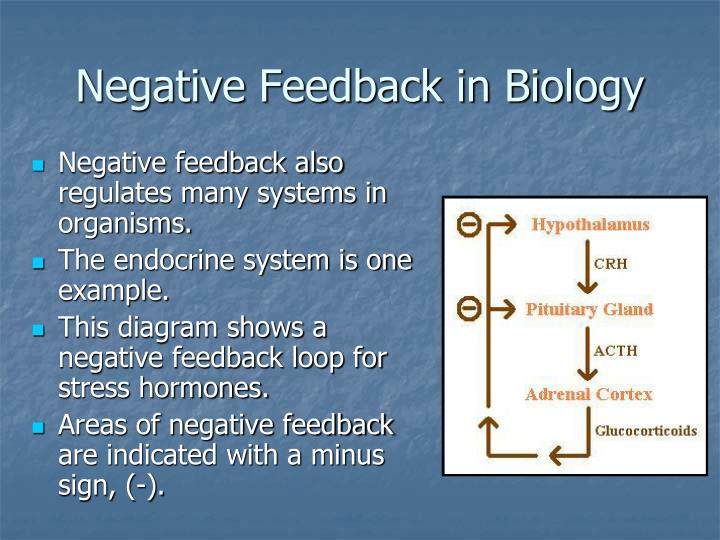 Endocrine system and negative feedback mechanisms essay academic service endocrine system and negative feedback mechanisms ccuart Images
