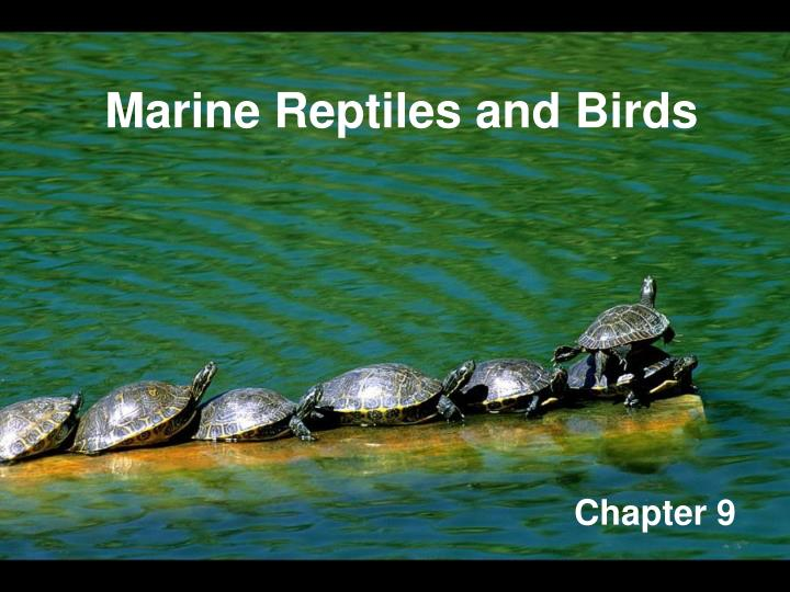 marine reptiles and birds n.