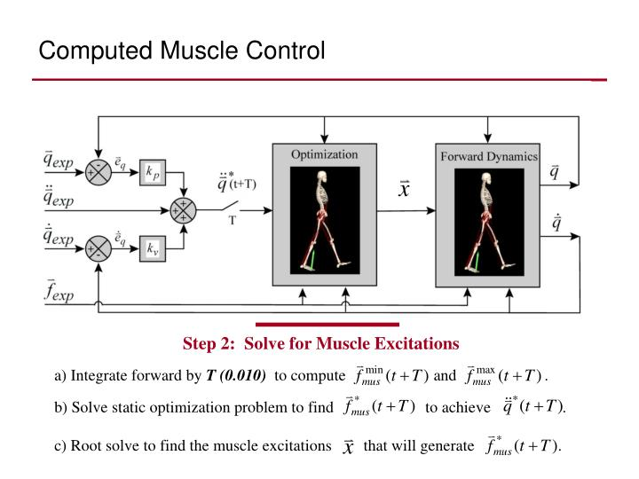 Computed Muscle Control