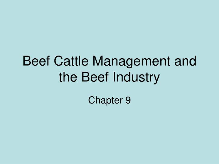 beef cattle management and the beef industry n.