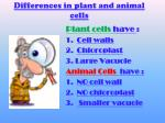 differences in plant and animal cells
