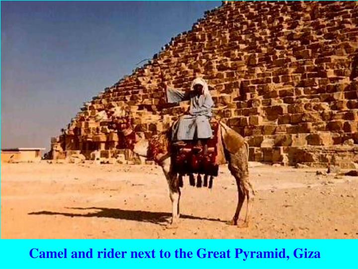 Camel and rider next to the Great Pyramid, Giza