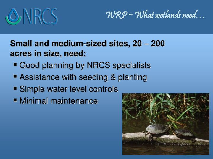WRP ~ What wetlands need…