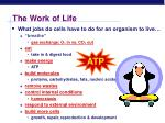 the work of life