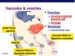 vacuoles vesicles