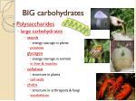big carbohydrates