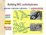building big carbohydrates