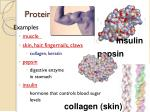proteins2