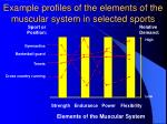 example profiles of the elements of the muscular system in selected sports