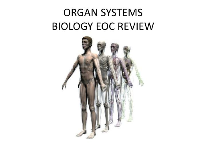 organ systems biology eoc review n.