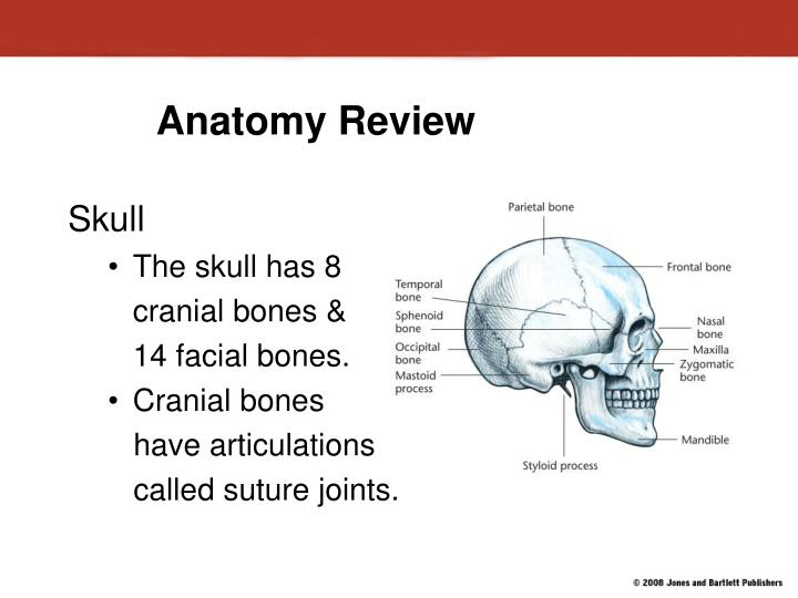 PPT - Injuries to: The Head, Neck and Face PowerPoint Presentation ...