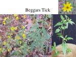 beggars tick
