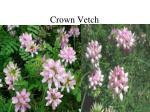 crown vetch