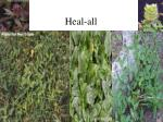 heal all