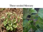 three seeded mercury