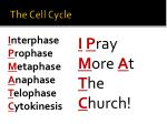 the cell cycle3