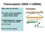 transcription dna mrna